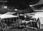 Whaling shed and carcass at Whangamumu. Taken by C...