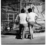 All frames show visitors at Wellington Zoo. They i...