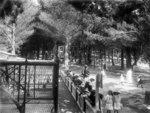 Wellington Zoo, circa 1910. Photograph taken by Sy...