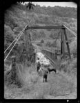 Suspension bridge over Hutt River floodwaters, Maoribank, Upper Hutt - Photograph taken by W Beavis
