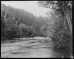 Falls Creek suspension bridge